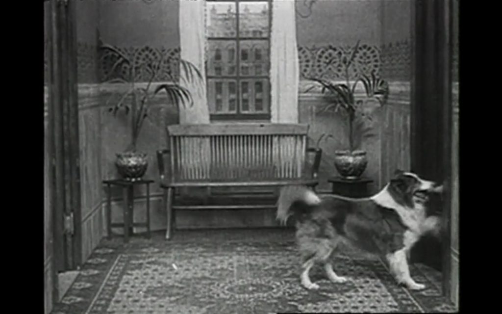 A Night Out (1915) (Rough Collie)