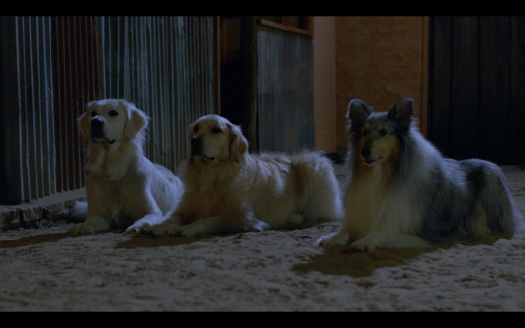 Adventures of Bailey: A Night in Cowtown (2012) (Golden Retrievers and Rough Collie)