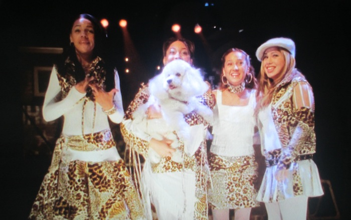 Cheetah Girls () (Bichon Frise)