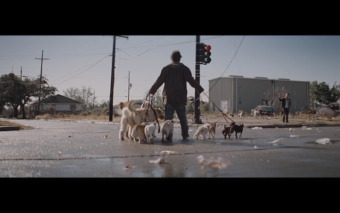 Killing Them Softly (2012) (Russell Terrier, Labrador Retriever, Standard Poodle, Pembroke Welsh Corgi, Pug, etc.)