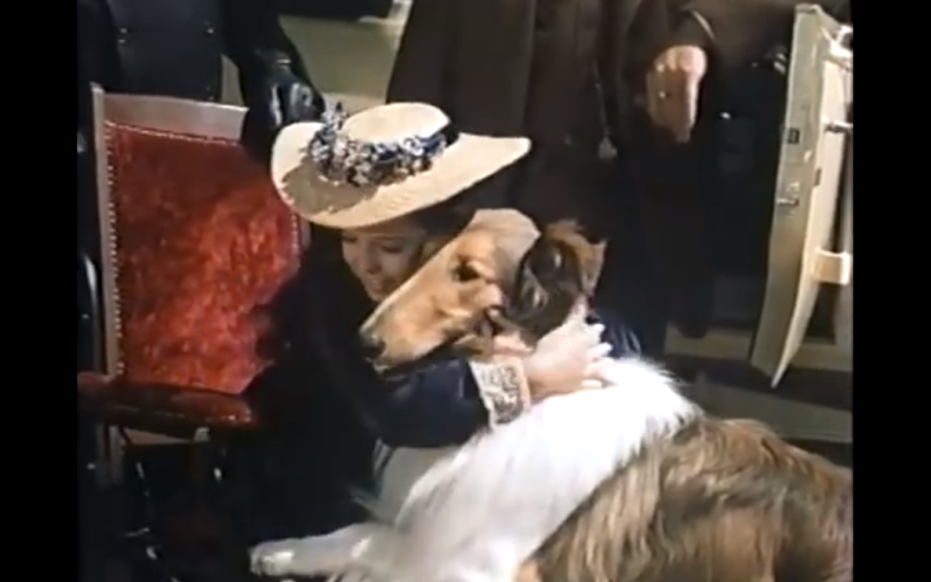 Lad: A Dog (1962) (Rough Collie)