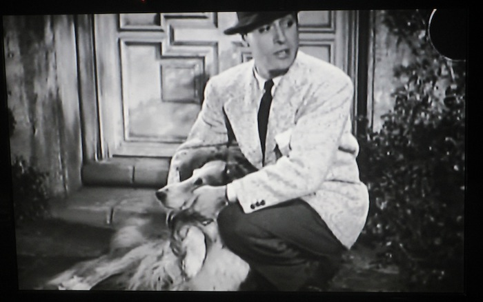 Love Affair (1939) (Rough Collie)