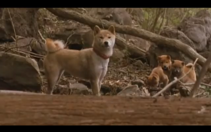 A Tale of Mari and Three Puppies (2007) (Shiba Inus)