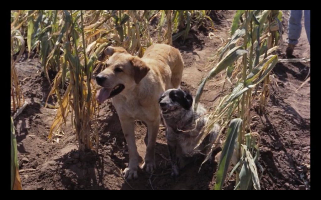 Old Yeller (1957) (mixed breeds)