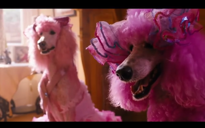 Pudsey the Dog: The Movie (2014) (Standard Poodles)