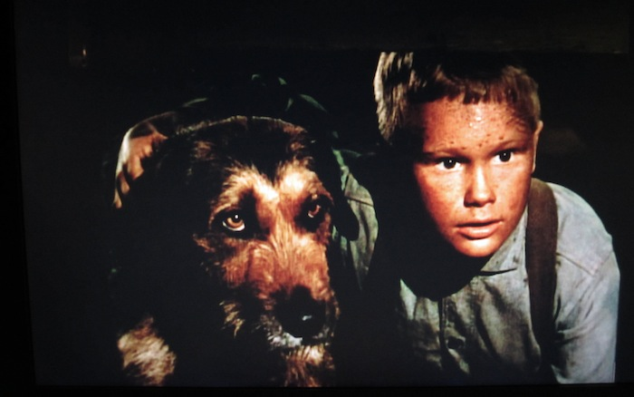 Shane (1953) (mixed breed)