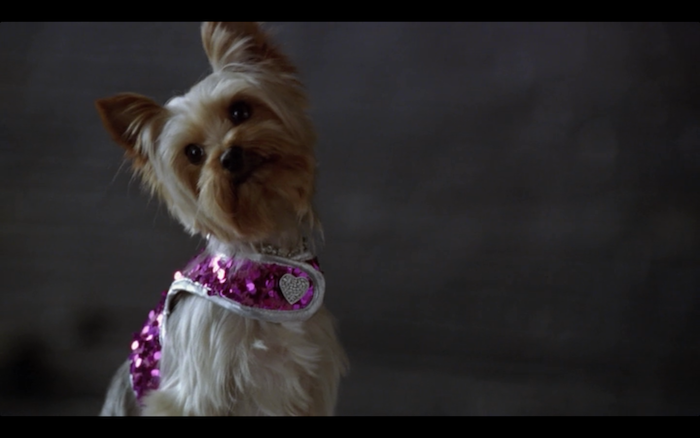 Sharpay's Fabulous Adventure (2011) (Yorkshire Terrier)