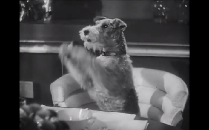 Song of the Thin Man (1947) (Wire Fox Terrier)
