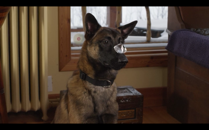 Step Dogs (2013) (Belgian Malinois)