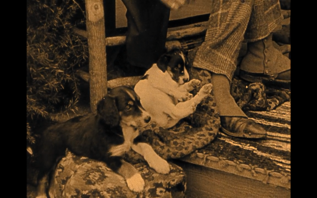 The Birth of a Nation (1915) (mixed breeds)