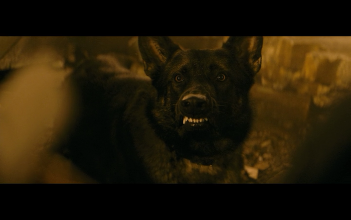 The Family (2013) (German Shepherd Dog)