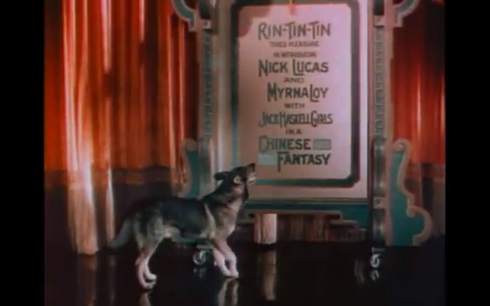 The Show of Shows (1929) (German Shepherd Dog)