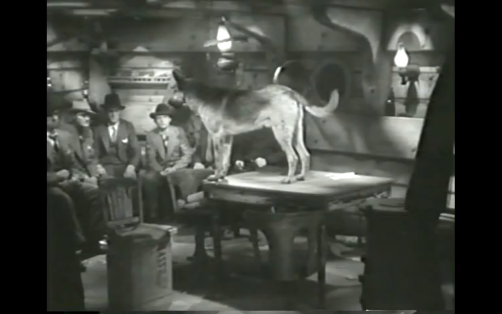 Tough Guy (1936) (German Shepherd Dog)