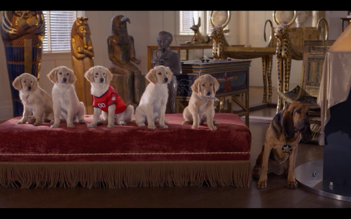 Treasure Buddies (2012) (Golden Retrievers and Bloodhound)