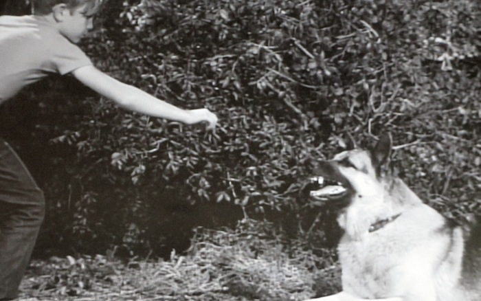 A Dog's Best Friend (1959) (German Shepherd Dog)