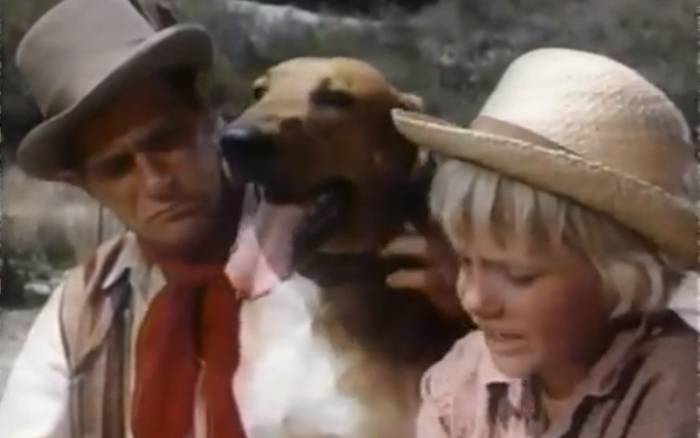 Boomerang, Dog of Many Talents (1968) (mixed breed)