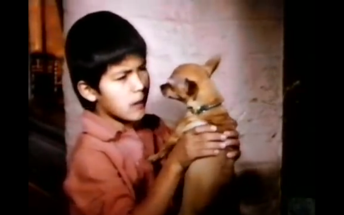 Pablo and the Dancing Chihuahua (1968) (Chihuahua)