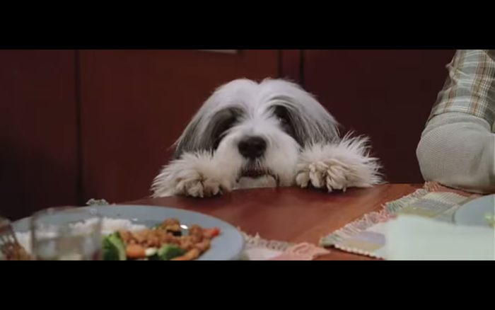 The Shaggy Dog (2006) (Bearded Collie)