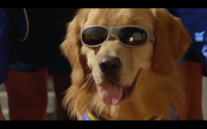 Air Bud: World Pup (2000) (Golden Retriever)