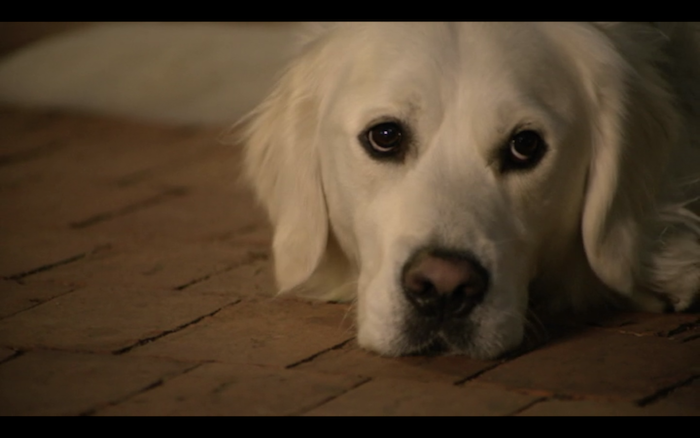 Adventures of Bailey: Christmas Hero (2012) (Golden Retriever)