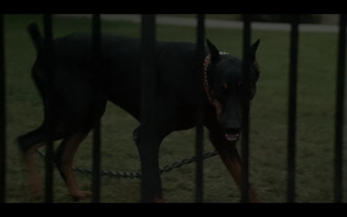 Girls Just Want to Have Fun (1985) (Doberman Pinscher)