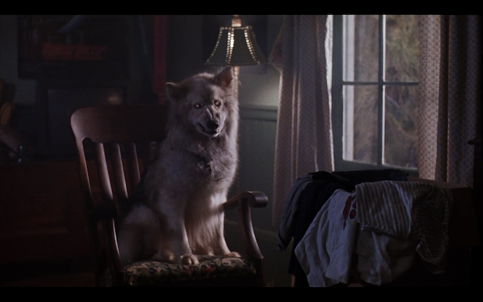 Pet Sematary II (1992) (mixed breed)