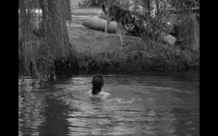 The Beast with a Million Eyes (1955) (German Shepherd Dogs)