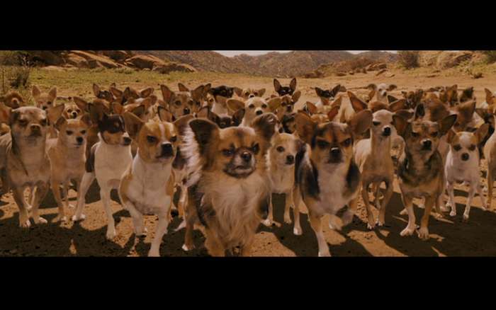 Beverly Hills Chihuahua (2008) (Chihuahuas, Toy Fox Terriers, mixed breeds)